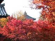 京都◇風俗◇ホスト◆京都風俗