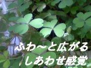 ♡ふわ〜と広がる幸せ感覚