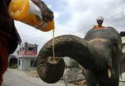 象とマンゴーの会