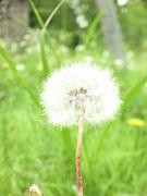 ---野の花ふぉとくらぶ---