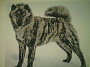 セタ(アイヌ犬)好き!