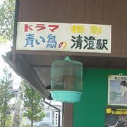 ドラマ・青い鳥
