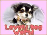 ☆Lovely Dog World☆大阪チワワ