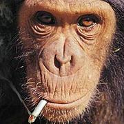 モペットたばこ部