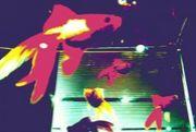 ブラウン管の金魚 液晶の空