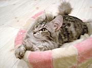 猫カフェ 【curl up cafe】