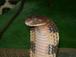 蛇研連合会