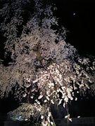 京都市(下・中京) 生活のチエ