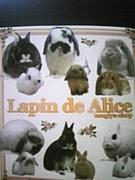うさぎ舎 Lapin de Alice