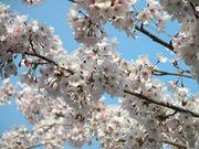 春の空気に包まれていたい