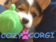 COZY☆CORGI