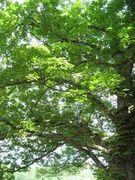 ガイラナの森
