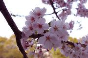 区立桜丘小学校 95年卒