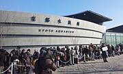 京都水族館「年間パス購入者」