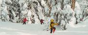 ネイチャースキーNature Ski