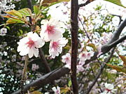 Niigata Seishin*清和寮