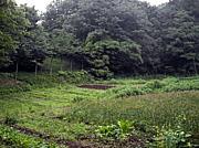 農うさぎ農園
