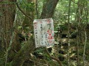 富士の樹海探索