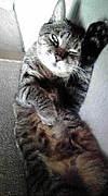 猫大好きトピック少ないコミュ