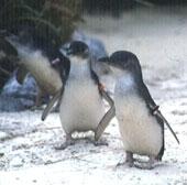 顔写真がペンギン