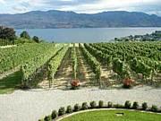 カナダ オカナガン産ワイン