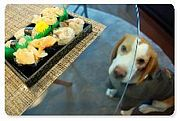 寿司sushi会