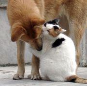 迷い犬と猫を考える