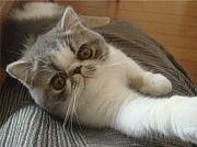 ☆秋田の猫好きさんのコミュ☆