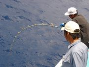 巨大魚釣たい・釣ったら自慢して