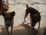愛犬ブラボー