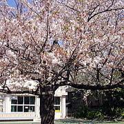 豊島区立 駒込小学校