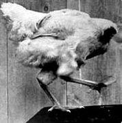 首なし鶏マイク