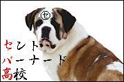 ☆★セントバーナード高校★☆