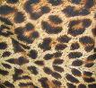 ヒョウ★-Leopard-★
