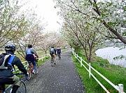 Cycle-Pistoni・レース&ポタ