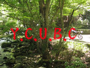 Y.C.U.B.C