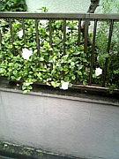 雨の日の写メとりましょ