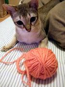冬までに編みたい!