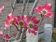 花水木を育てる会
