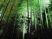 京都心霊スポット、お寺♪オフ会