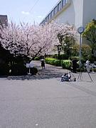 さくら会(大阪聖母学院小学校)