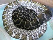 新潟爬虫類&両生類飼育者の集い