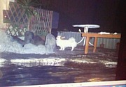 温泉 で まったりin神奈川