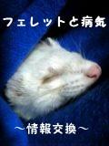 フェレットと病気〜情報交換〜