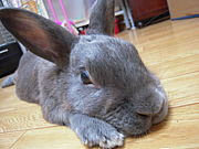 ウサギは家族です!
