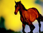The Horse Photograph