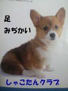 愛犬しゃこたんクラブ(ゲイ)