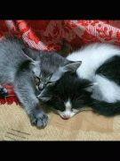 LOVE♡猫