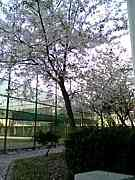 枚方西高校硬式テニス部
