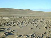世界の砂を全て数えてみないか?